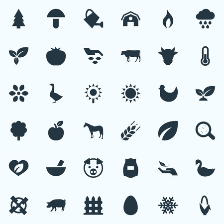 Vector Illustration Set Of Simple Ecology Icons. Elements Foliage, Champignon, Fruit And Other Synonyms Care, Agriculture And Shield. Иллюстрация