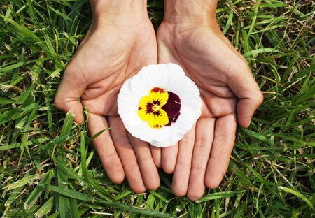 Flower in palms of hands photo