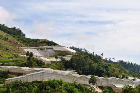 scenarios: Horticulturing in Bertam Valley, Malaysia