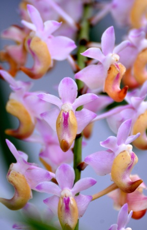 Close-up of a tropical wild orchid Stock Photo - 17005573