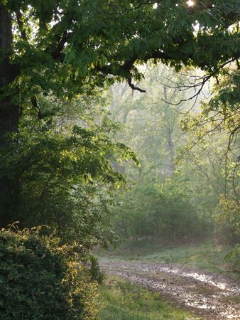 Nature path through trees in the country at sunrise with rays of light and mist under tree arch Stock Photo - 3069736