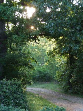 Nature path through trees in the country at sunrise with rays of light and mist under tree arch