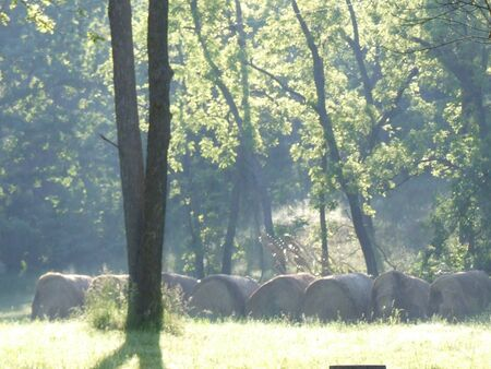 hay; bales of hay in country meadow with sun shinning Stock Photo