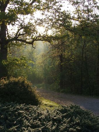 Nature path through trees in the country at sunrise with rays of light and mist under tree arch Stock Photo - 3259762