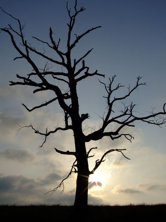 Lone wicked dead tree with sunsetting behind it