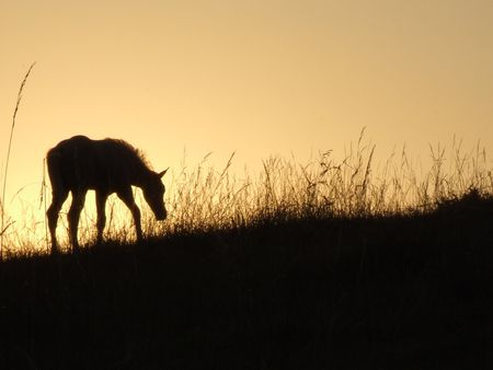 new born foal in first morning light Stock Photo