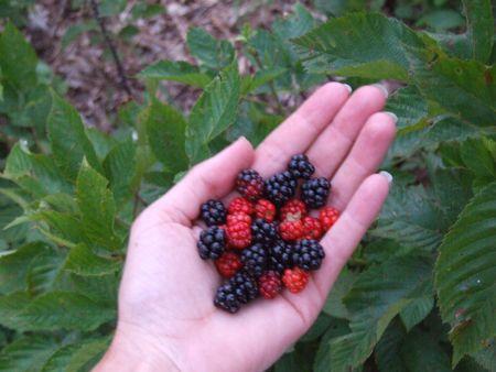 berries; fresh berries in hand photo