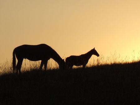 horse Stock Photo - 3283420