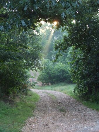 Nature path through trees in the country at sunrise with rays of light and mist under tree arch photo