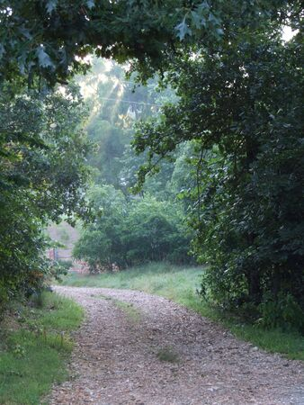 Nature path through trees in the country at sunrise with rays of light and mist under tree arch Stock Photo - 3283429