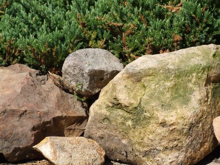 rock evergreen background Stock Photo