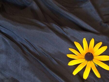 sunflower background isolated on black  Stock Photo