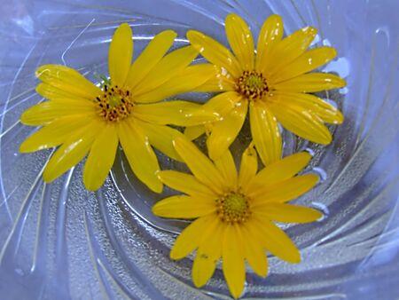 sunflowers background Stock Photo