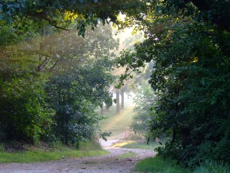 road and path through: Misty sunlight lighting a forest trail