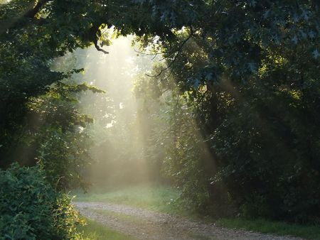 Misty sunlight lighting a forest trail photo