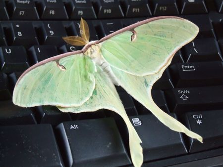 Butterfly on keyboard