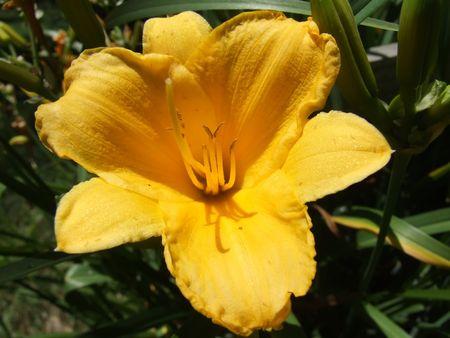 macro of bright yellow flower