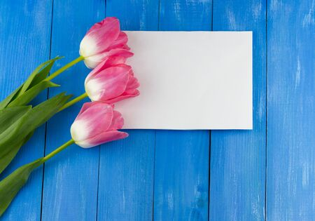 Top view of pink tulips with white sheet of paper on blue wooden background Standard-Bild