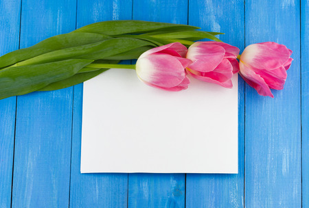 Top view of pink tulips with white sheet of paper on blue wooden background Stock Photo