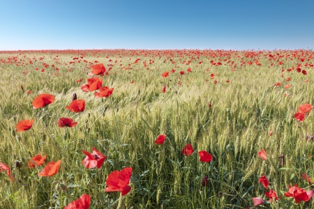 non cultivated: Beautiful day on agricultural land  Stock Photo