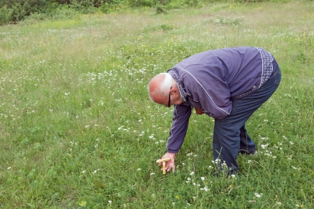Picking mushrooms in a meadow  photo