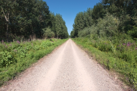end of road: Driving on the gravel road through the wood at sunny day