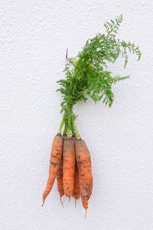 Bunch of carrots hanging on the wall photo