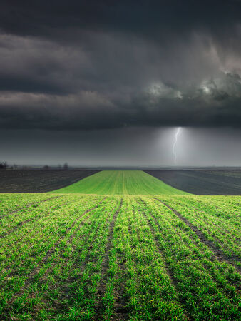 Young wheat crop in field towards the big cloud and lighting storm photo