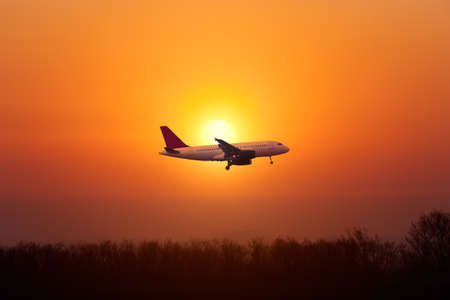 airplane landing: Airplane landing against the setting sun over the trees  Stock Photo