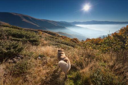 mountain dog: Mountain landscape - Faithful dog watching into the sun at dawn