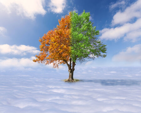 Concept for diversity - Single tree with green and red leaves above the clouds at the idyllic sunny day photo