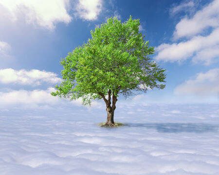 Concept for success - Single tree with green leaves above the clouds at the idyllic sunny day photo