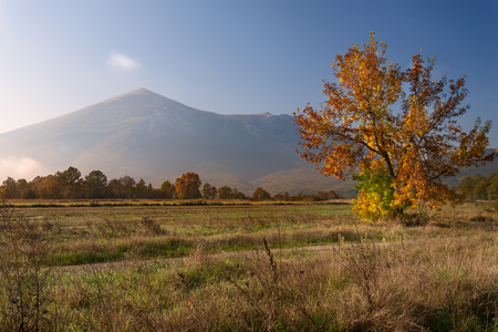 yelloow: Morning landscape with a lone tree and view on the mountain peak. Rtanj - Serbia