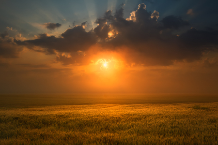 Idyllic misty sunset and clouds over wheat field towards the setting sun.