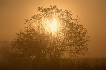penetracion: La penetraci�n de la luz solar a trav�s de las ramas de un �rbol solitario en niebla por la ma�ana
