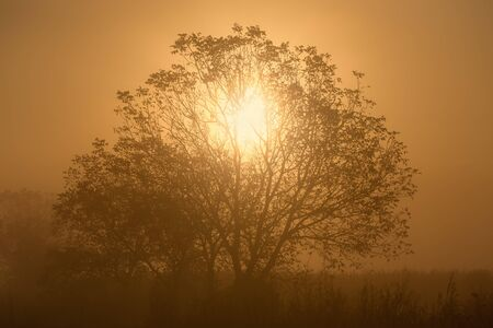 penetration: Penetration of sunlight through the branches of a lone tree at misty morning Stock Photo