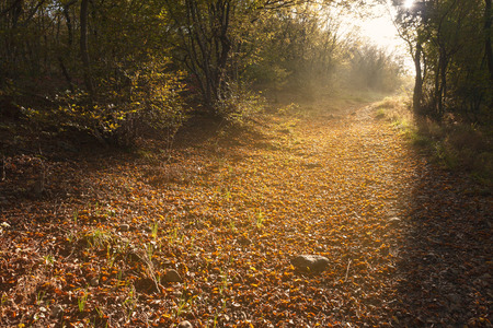 autumn path: Pedestrian trail predicted for recreation in the early morning hours versus the rising sun covered with fallen autumn leaves. Stock Photo