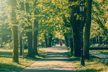 walking zone: Walking zone through alley of trees and old street lamps in the park Spa Vrnjacka Banja  Serbia. Shallow depth of field. Stock Photo