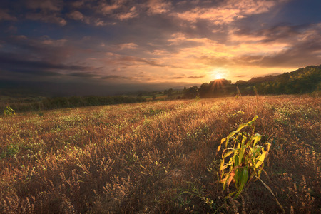 untreated: Abandoned untreated agricultural meadow at dawn. Autumn landscape at sunrise.