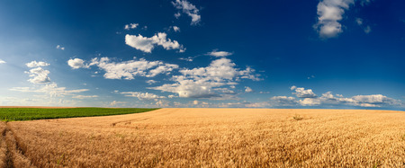 loess: Agricultural panorama of wheat fields executed on Titel Hill. Titel Hill is a loess hillock situated in the Vojvodina province, Serbia and it is used only and exclusively for agricultural purposes.
