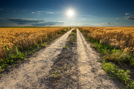 gravel: Driving on an empty dirt road through the wheat fields towards the setting sun.