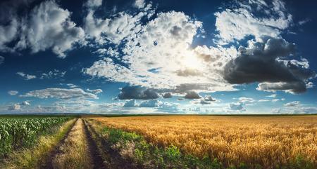 granja: Panorama agrícola de campos de trigo y de maíz con la división de camino de tierra, ejecutado en Titel Hill. Titel Hill es una colina de loess situada en la provincia de Vojvodina, Serbia y se utiliza única y exclusivamente para fines agrícolas.
