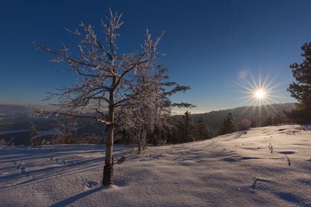 Single frozen tree and field covered with snow at beautiful sunset. Mountain Divcibare, Serbia.