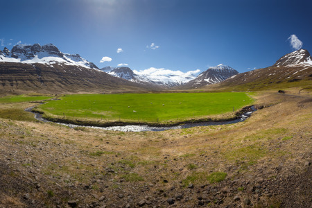 Iceland landscape panorama of mountains and beautiful green field with grazing sheeps at sunny day. Stock fotó