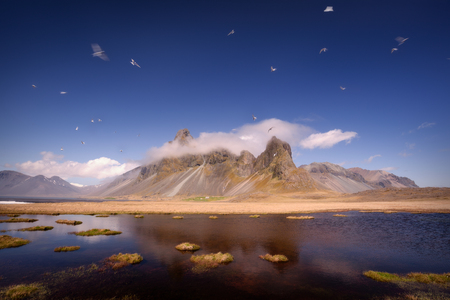Iceland landscape photo of Eystrahorn mountains with many flying birds in air at area known for intensive birdlife at idyllic day.