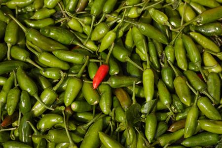 red chilli: Red chilli vs green chilli Stock Photo