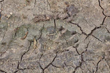 갈라진 마른 진흙에 개 표시 스톡 콘텐츠
