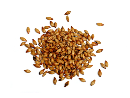 malted: Malted and Roasted Barley on White Background Stock Photo