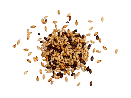 malted: Mixed Malted Barley on White Background Stock Photo