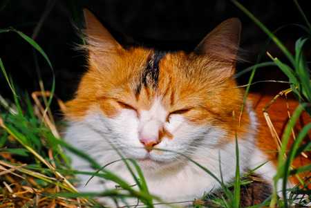 drowsiness: Sleeping cat